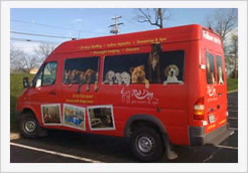St patricks for Red dog daycare